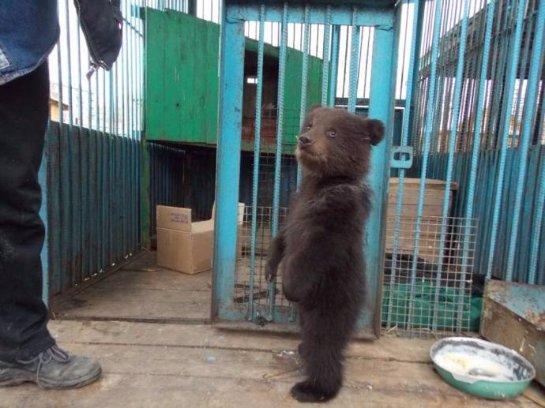 Жители Киргизки нашли медвежонка