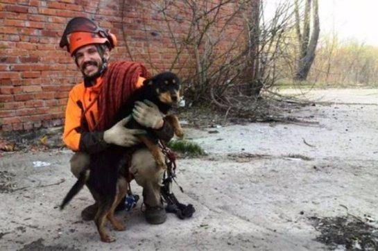 В Курске вытащили собаку из колодца