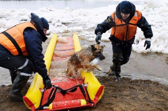 В Томске спасли собаку