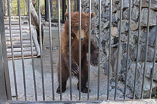 В Новосибирский зоопарк подбросили двух медвежат