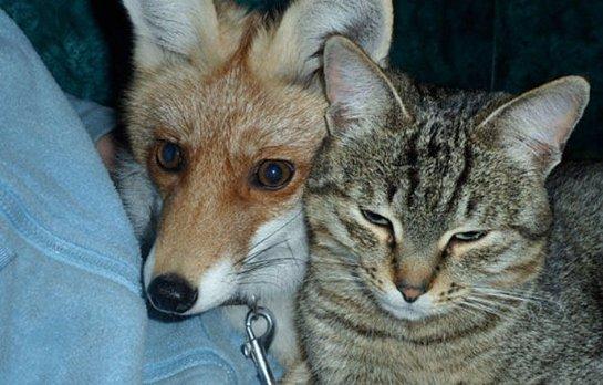 В Астрахани приютили щенков лисы и степного волка