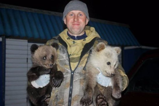 В Костромской области участковый спас медвежат