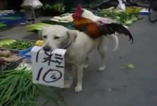 Собака стала продавцом кур