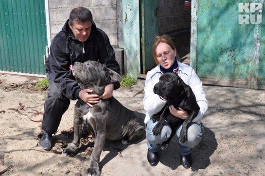 Житель Кубани построил приют для животных после того, как его спасла собака