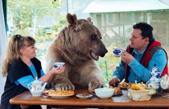 Медведь, который живет в русской семье