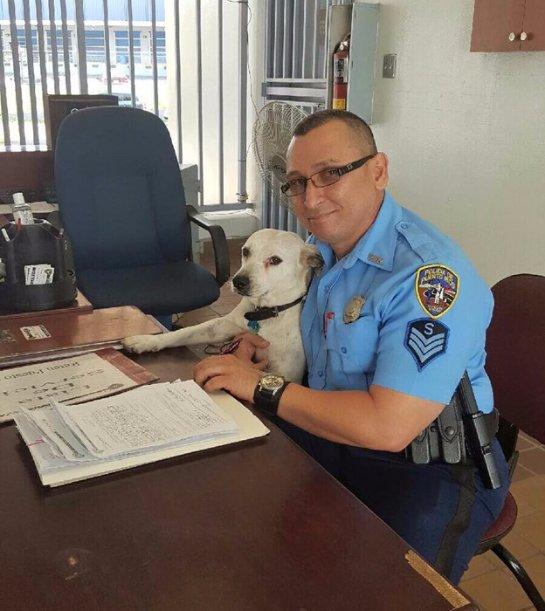 В Пуэрто-Рико бездомного пса взяли на работу в полицейский участок