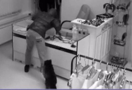Енот напугал грабителя магазина женской одежды в Москве