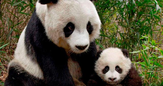Благотворительность для диких животных