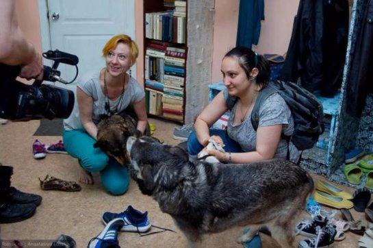 В Томской библиотеке собаки знакомят детей с книгами