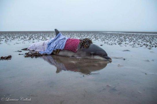 Счастливое спасение дельфина