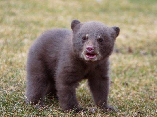 Медвежонок дружит со скунсом