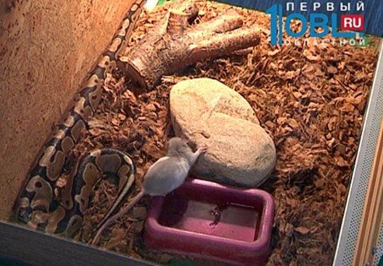 Мышь дружит с питоном