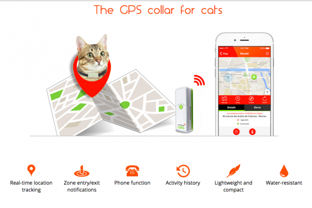 Хотите поговорить с вашей кошкой?