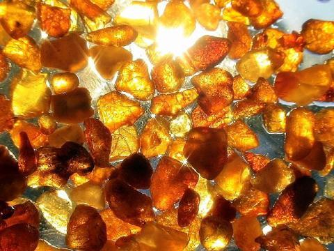 Полиция поймала копателей янтаря в Чернобыльской зоне