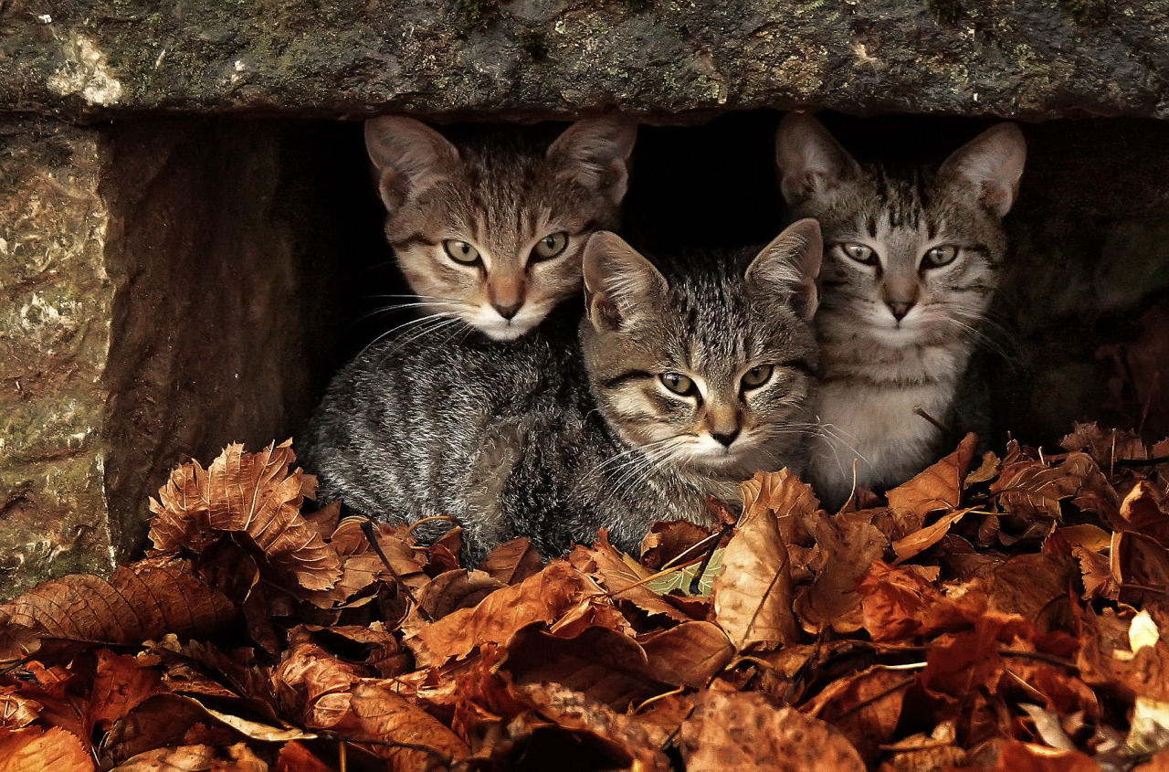 В Германии началась борьба с бездомными кошками