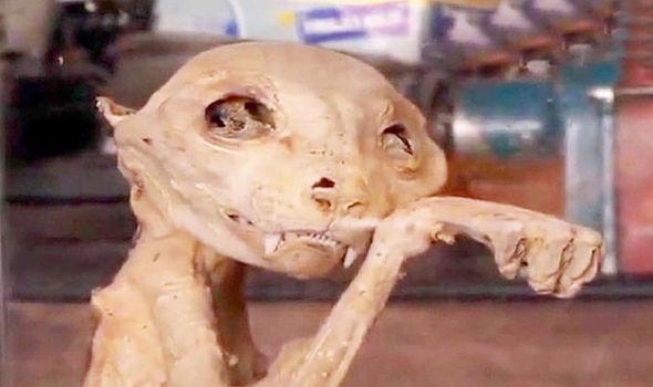 Найдены мумифицированные останки монстра