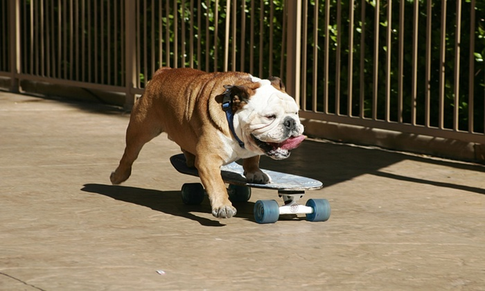 Пёс-рекордсмен Тиллман умер в возрасте 10 лет