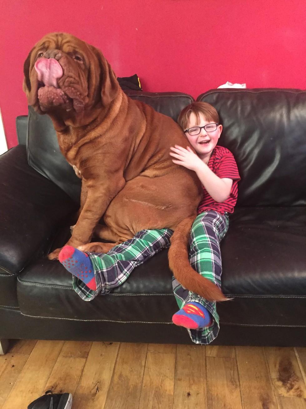 Пес-терапевт