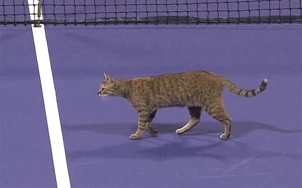 Кот решил поиграть в теннис