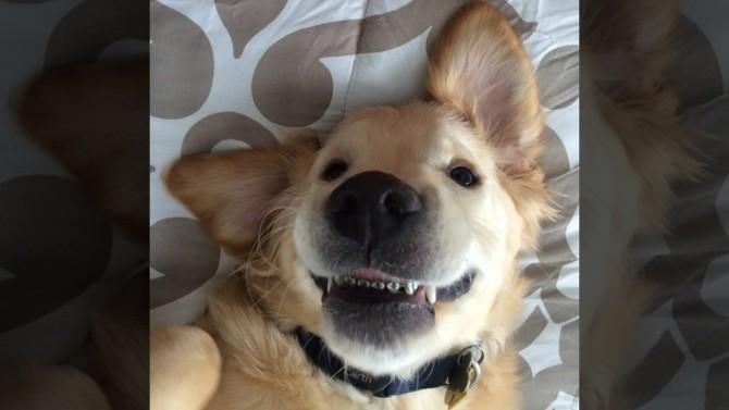 Пес с брекетами покоряет интернет своей улыбкой