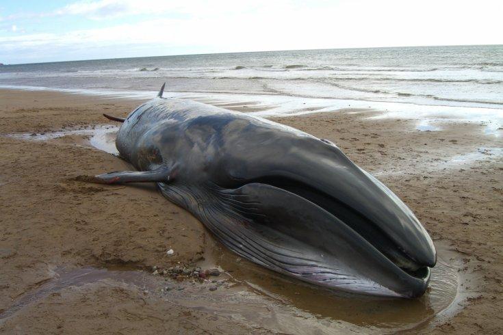 Китов нашли мертвыми: неудача или самоубийство?