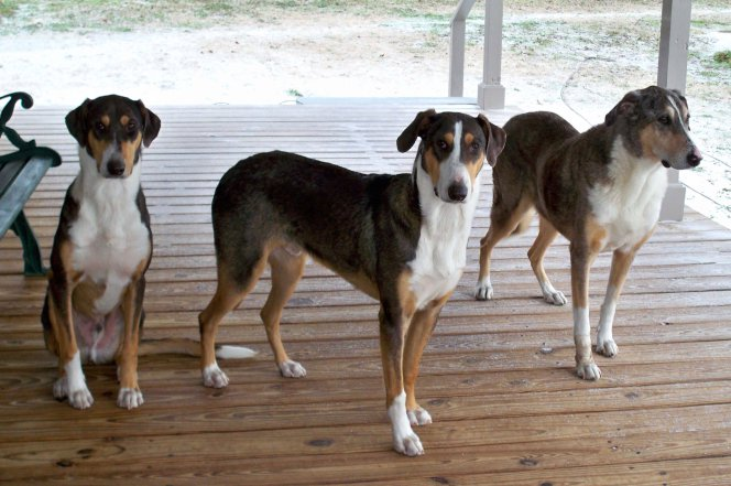 Клонирование собаки — блажь или необходимость?