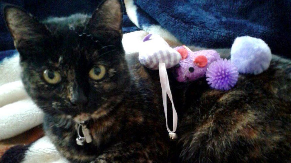 Серийный убийца кошек все еще на свободе