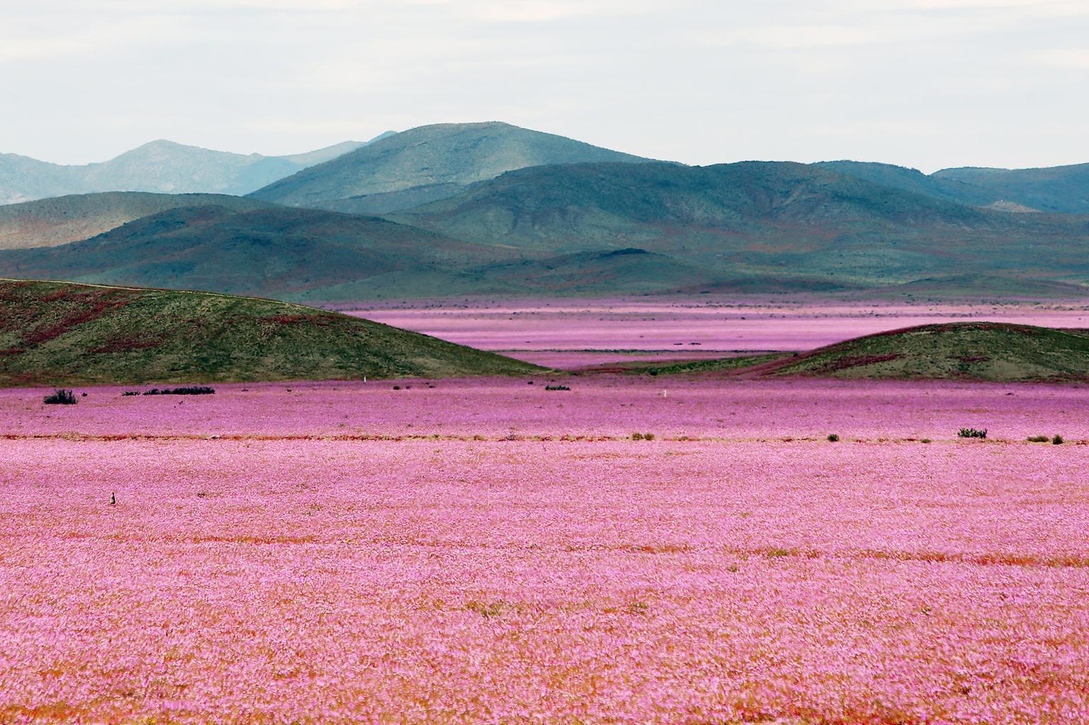 Пустыня в цвету
