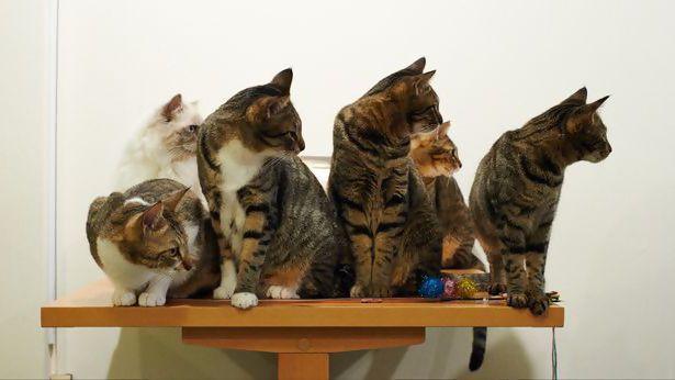 Шотландка поплатилась за любовь к кошкам