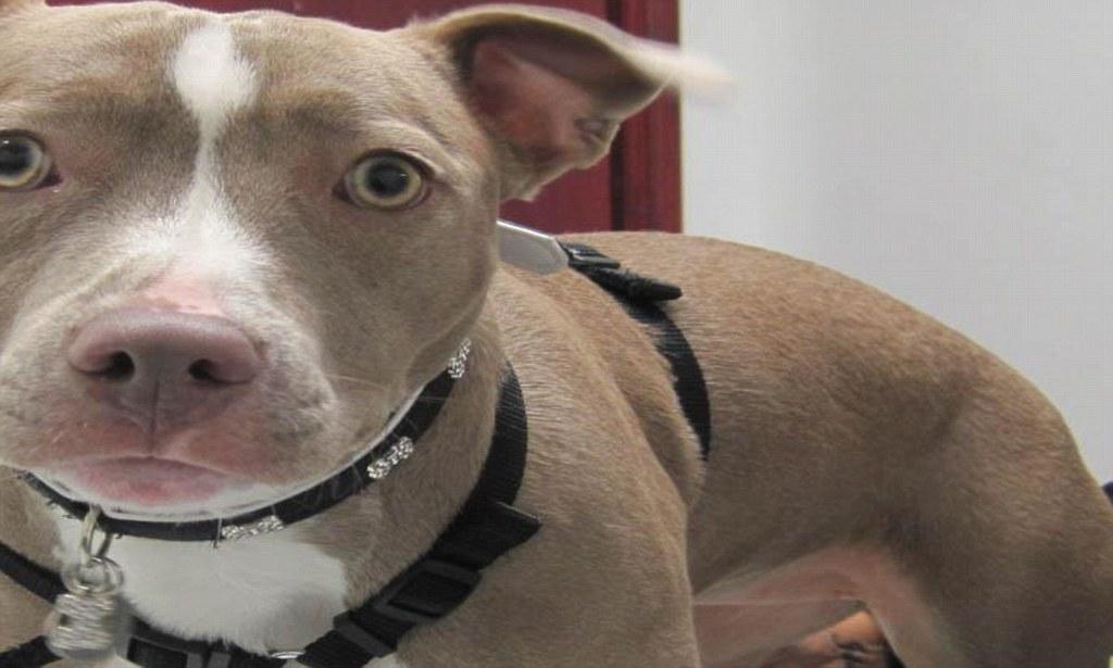 Собака-гермафродит нашла своего хозяина