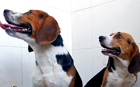 Китайские ученые создали супер щенков