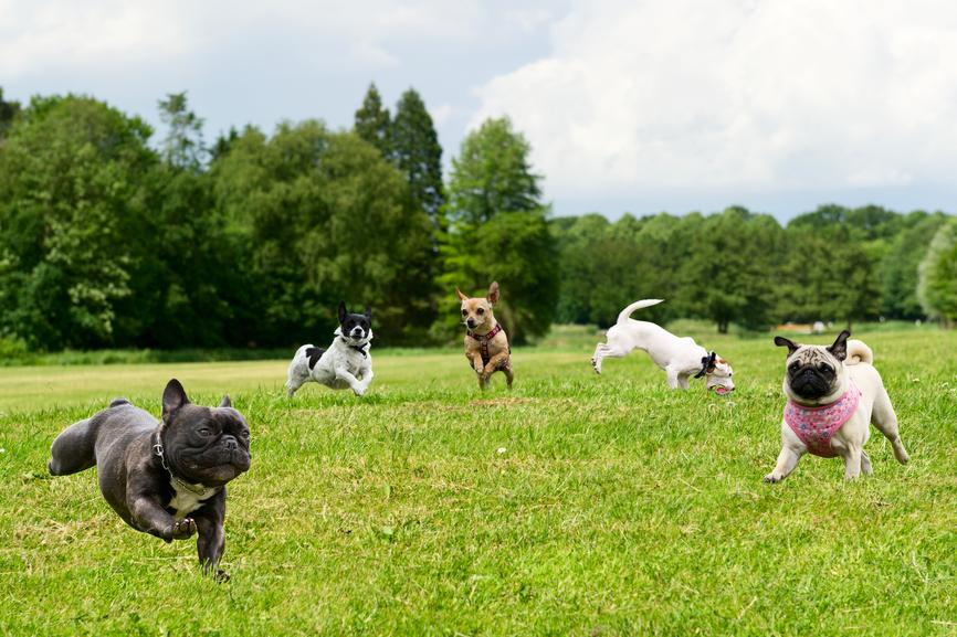 В Беверли-Хилз откроется парк для собак