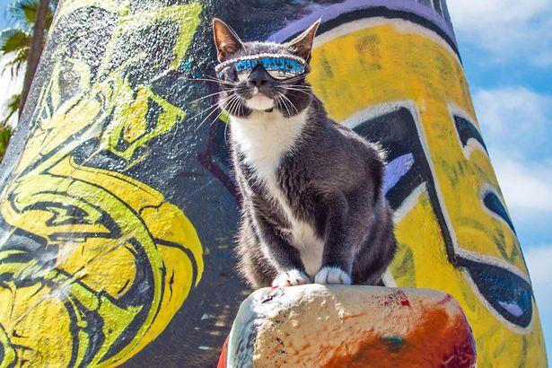 Кот с редким заболеванием вынужден носить очки
