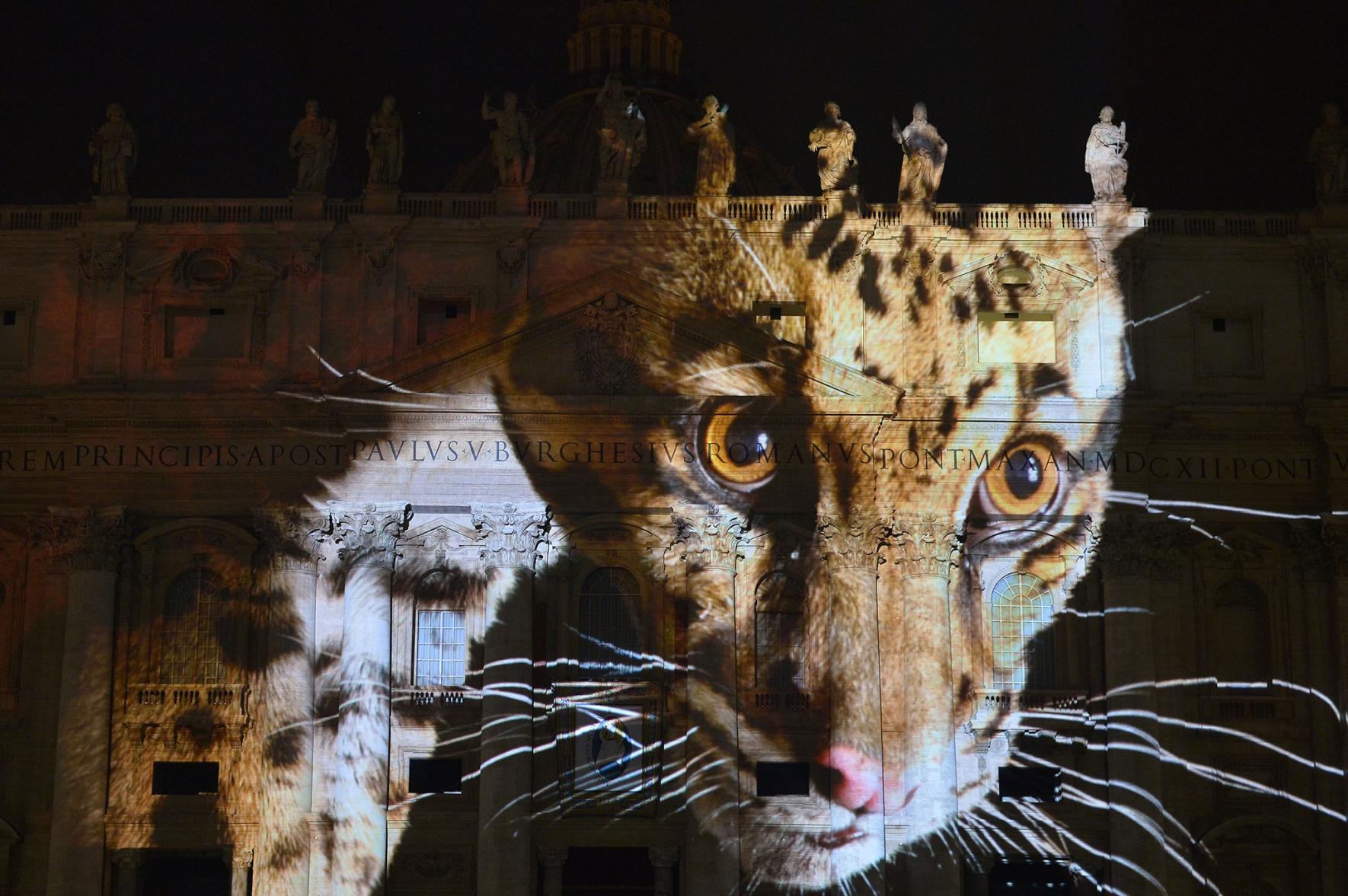 Исчезающие виды животных в Ватикане