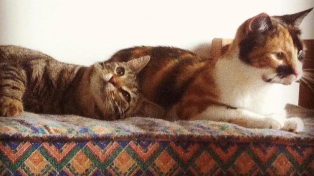 В Новой Зеландии откроется кафе для кошек