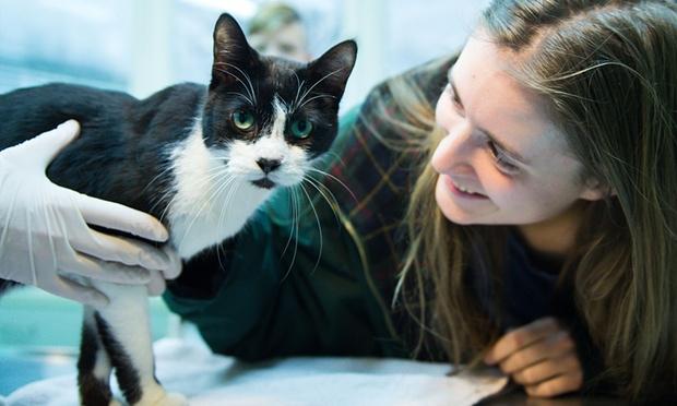 Кот вернулся домой спустя 7 лет