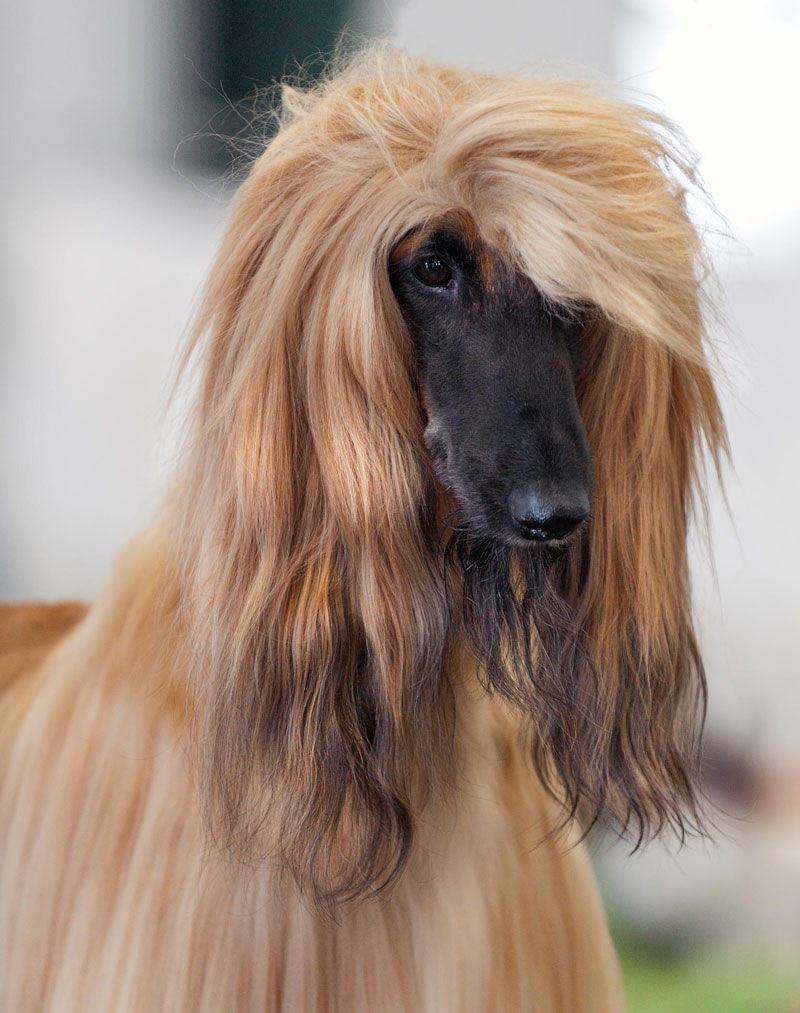 Названа самая древняя порода собак