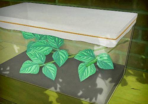 Как ухаживать за бабочками?