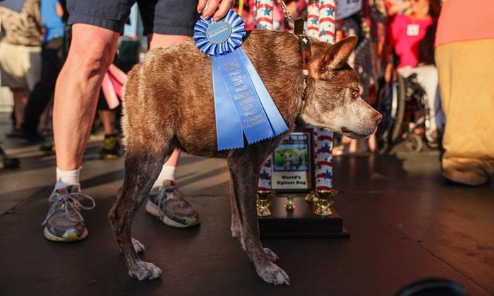 Названа самая уродливая собака 2015 года
