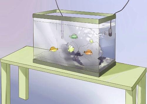 Как обустроить миниатюрный морской аквариум