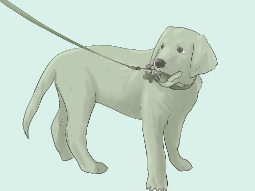 Как вырастить уравновешенного щенка