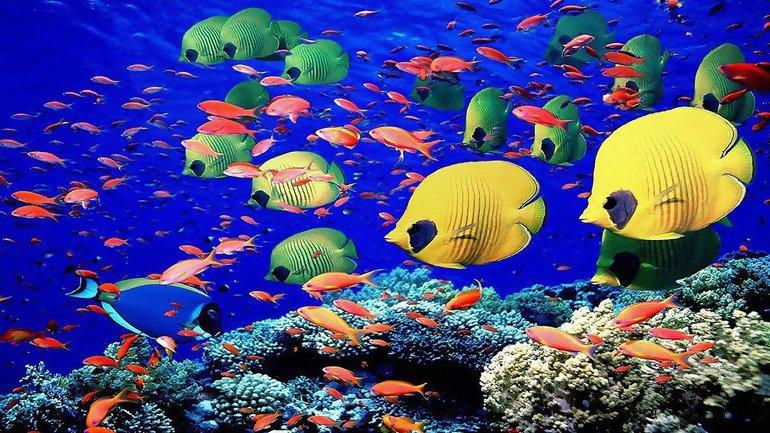 Рыбы величайшие спортсмены на земле