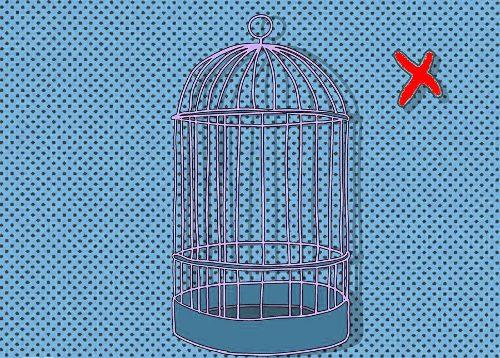 Как выбрать клетку попугаю?