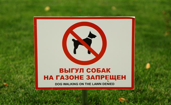 Жителей Москвы заставят убирать за своими собаками