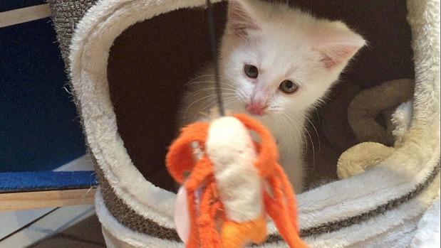 В Новой Зеландии открыто первое кафе для кошек