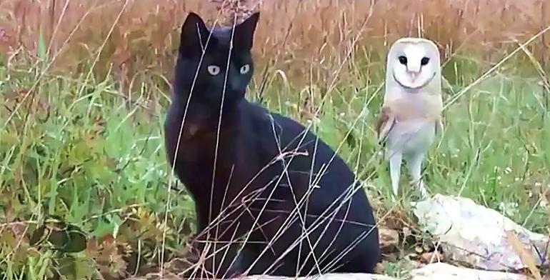 Необыкновенная дружба совы и кота