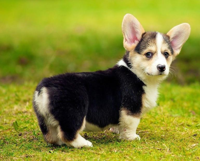 Новая звезда интернета — самый пугливый пёс в мире