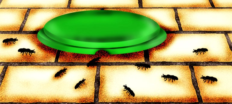 Что делать если кошачью миску окупировали муравьи?