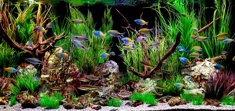Как идеально украсить свой аквариум?