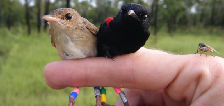 Как ухаживать, если птица не может летать?